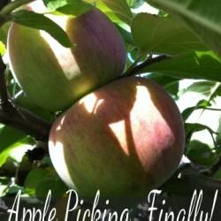 applepickingfinally