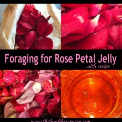 foraging for rose petal jelly