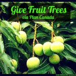 Family Advent Calendar, Day 9: Give Fruit Trees! Contribute to Plan Canada!