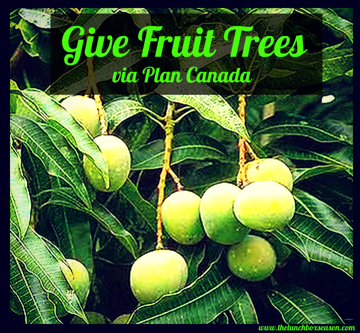 Give Fruit Trees!