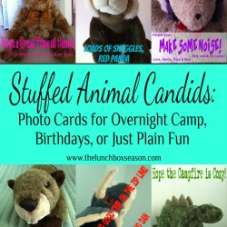 Stuffed Animal Candids Photo Cards