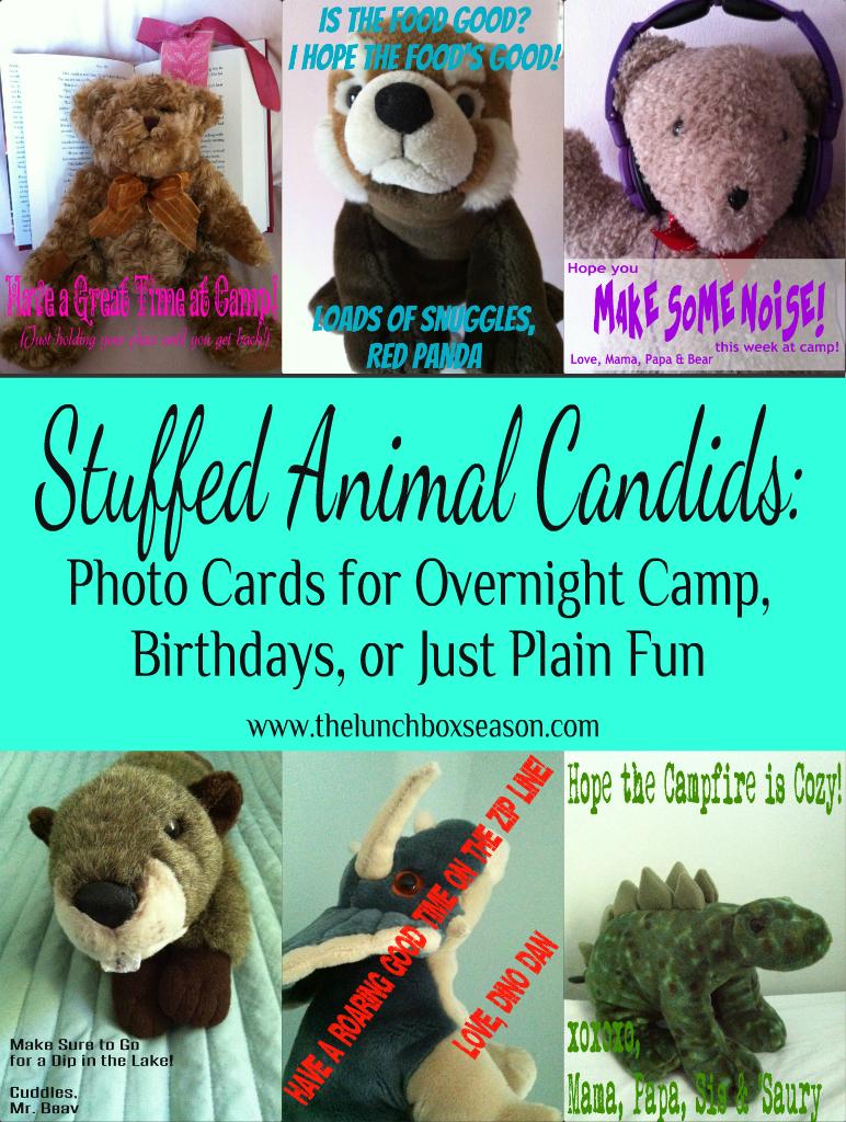Stuffed Animal Candids Photo Cards