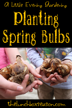 featured bulbs