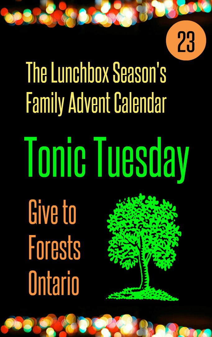 Advent Day 23 Tonic Tuesday Give to Forests Ontario