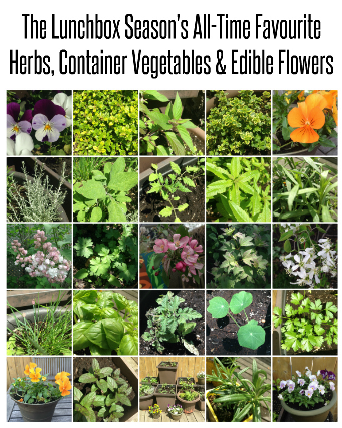 The Lunchbox Season's All-Time Favourite Herbs, Container Vegetables and Edible Flowers