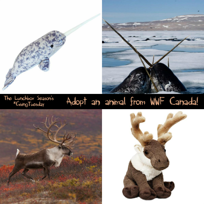the-lunchbox-seasons-givingtuesday-adopt-an-animal-from-wwf-canada